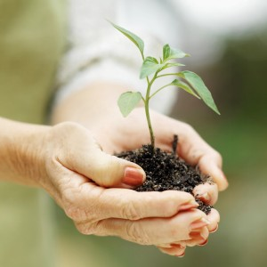 Close-up mid section of woman holding seedling